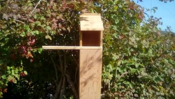 Tawny Owl Box.