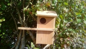 Screech/Little Owl Box
