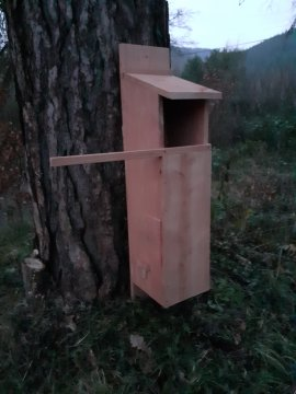 Wise Owl box - just needs a tree and an owl!